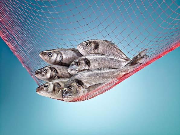 Balık tüketiminde hedef kişi başı 15 kilograma ulaşmak