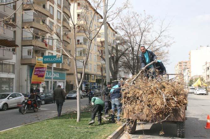 Kilis Belediyesi ağaçları budamaya başladı