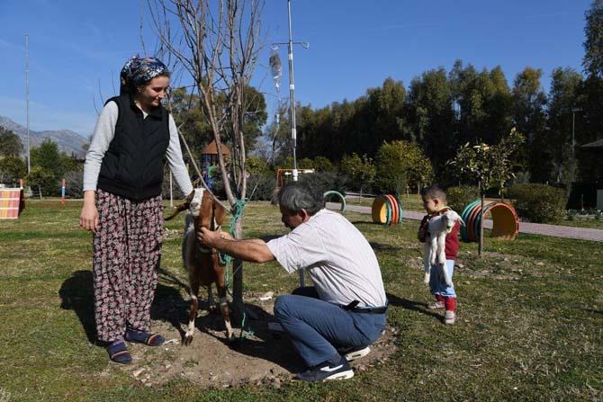 Konyaaltı Barınağı'nda yeni doğum yapmış keçi tedavi edildi