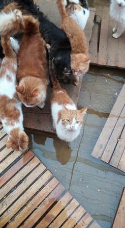 Barınaktaki kediler sular altında kaldı