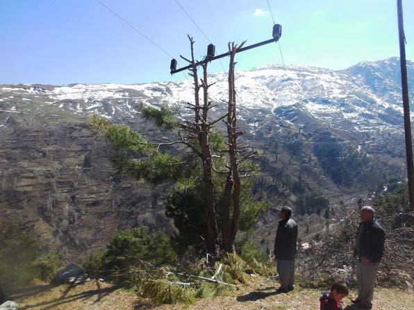 Çam ağacı elektrik direği oldu
