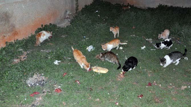 Öğrenciler kumbarada biriktirdikleri parayla yiyecek alıp sokak hayvanlarını besledi