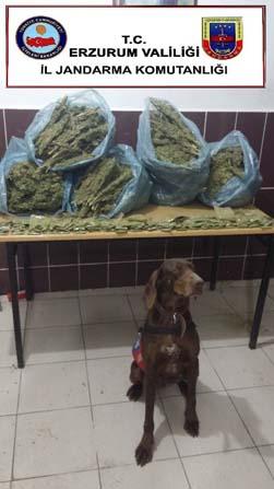Toprağa gömülü uyuşturucuyu narkotik köpeği buldu