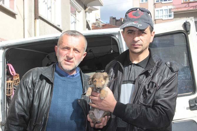 Yaralı ve hasta köpek tedavi için Eskişehir'e gönderildi