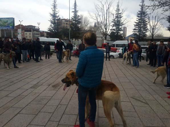 Hollanda'yı Kangal köpekleri ile protesto ettiler