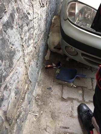 Otomobil ile duvar arasında sıkışan köpek kurtarıldı