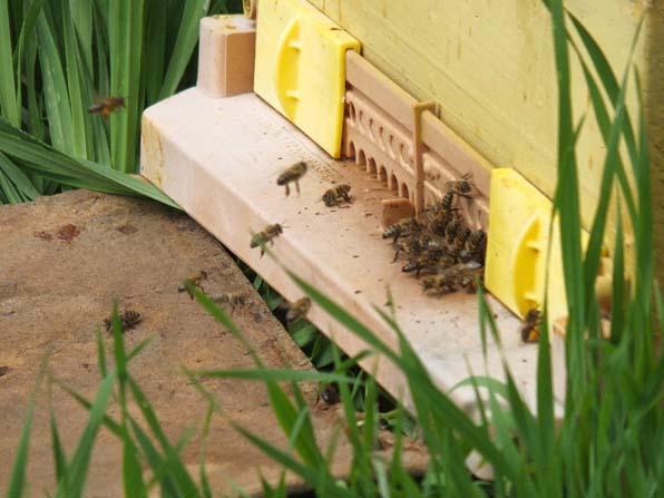 Kuraklık arıları vurdu, üretim düştü