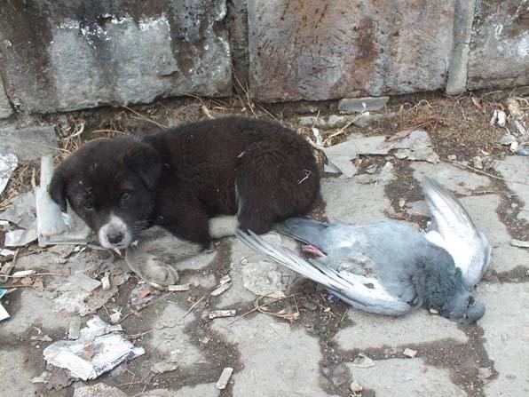 Sokak köpeği donan güvercini yalnız bırakmadı