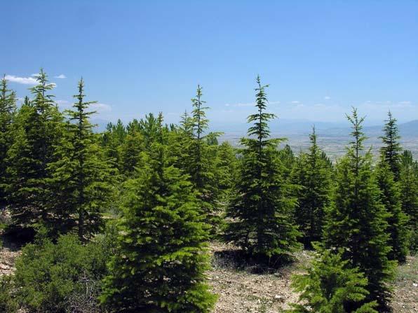 Eskişehir'de yıl sonuna kadar 19 bin 748 dekar alanda ağaçlandırma çalışması yapılacak