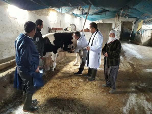 Hayvanlar için sağlık taraması