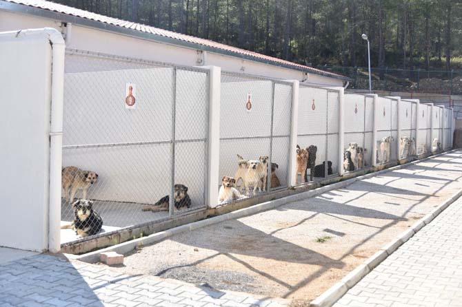 Alanya Belediyesi'nden sahipsiz hayvanlara hizmet