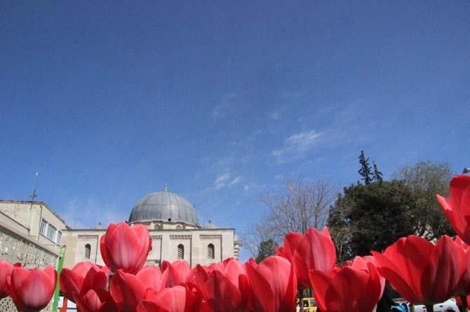 Kilis'te Laleler güzel görünüm oluşturdu