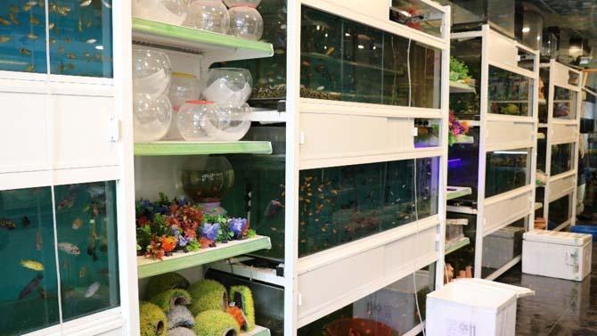 Stres atmak isteyen vatandaşlar süs balıklarına ilgi gösteriyor