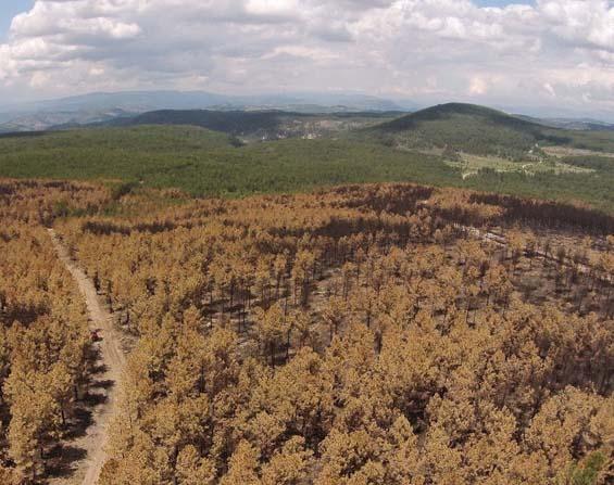 Balıkesir orman yangınlarıyla mücadeleye hazır