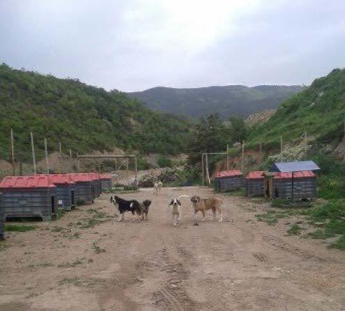 Simav'a köpek barınağı
