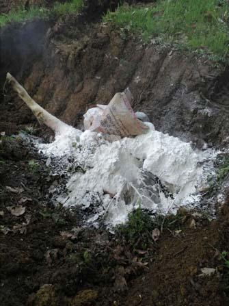 Kandıra'da otlatmaya çıkarılan dana parçalanmış halde bulundu