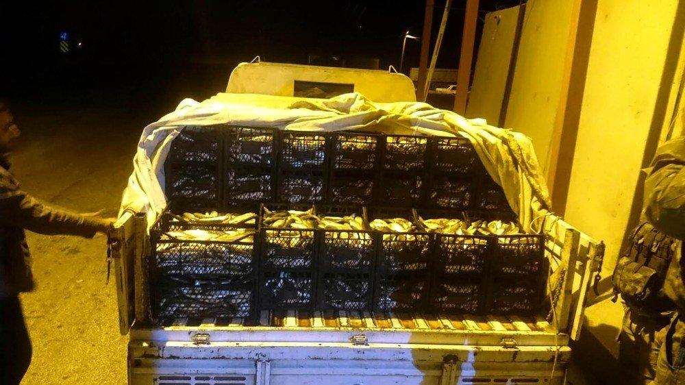 Ahlat'ta 1,5 ton kaçak avlanmış balık ele geçirildi
