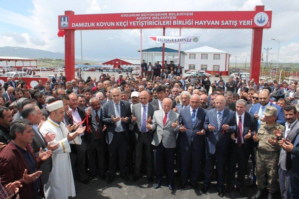 """Başkan Şengül: """"Yeni hayvan pazarları fayda sağlayacak"""""""