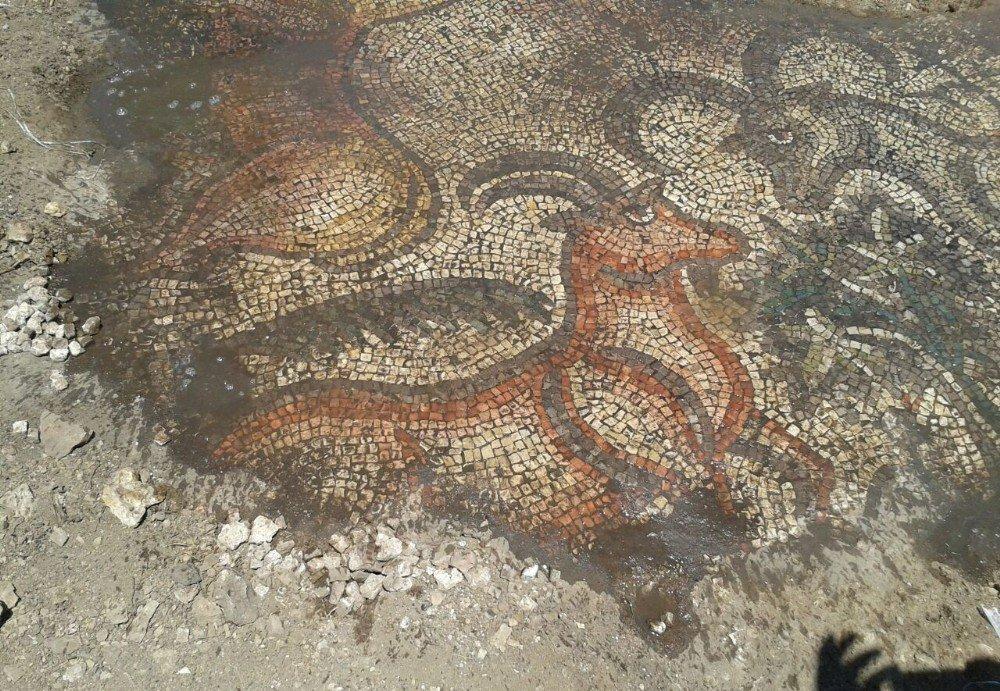 Çiftçiler tarlada tarihi mozaik buldu