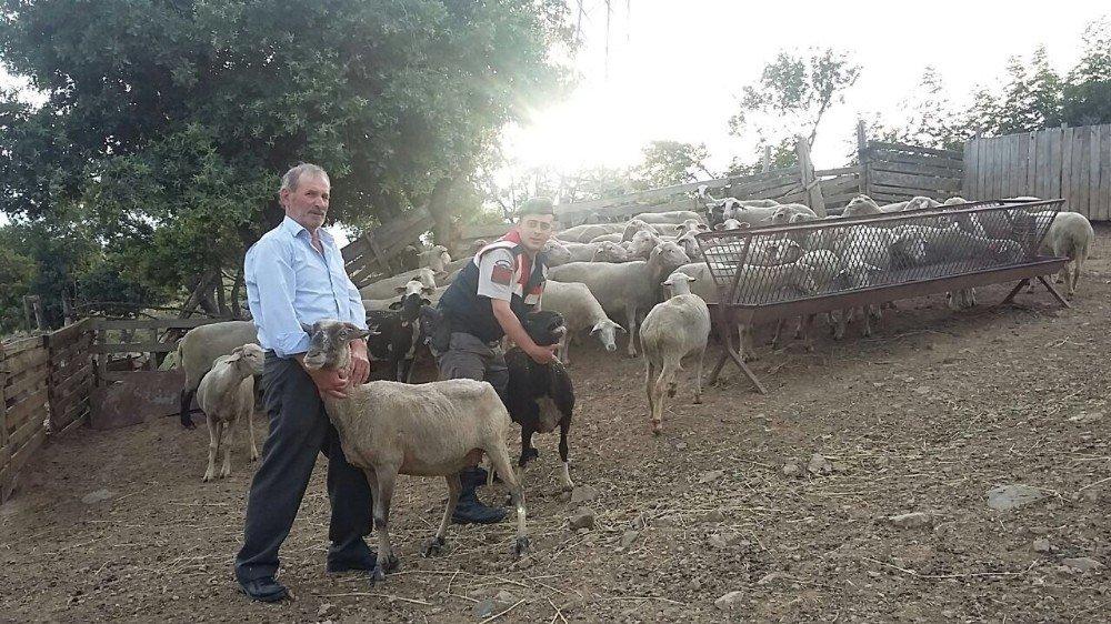 Biga'da çalınan hayvanlar otlatılırken bulundu