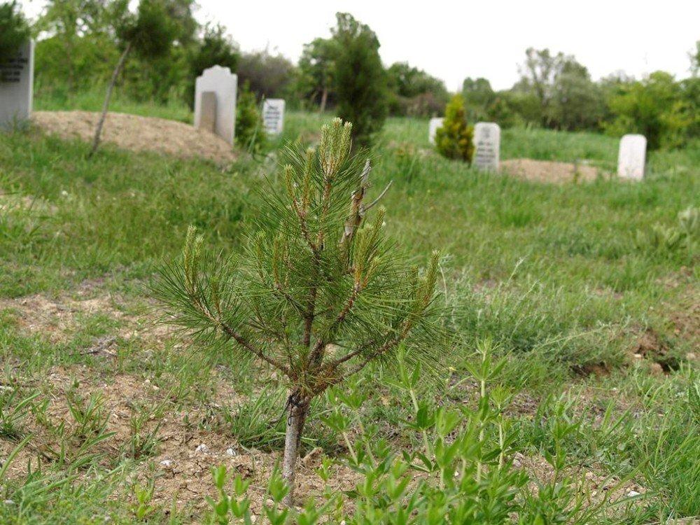 Orman Bakanlığı Türkiye'yi yeşillendirmeye devam ediyor