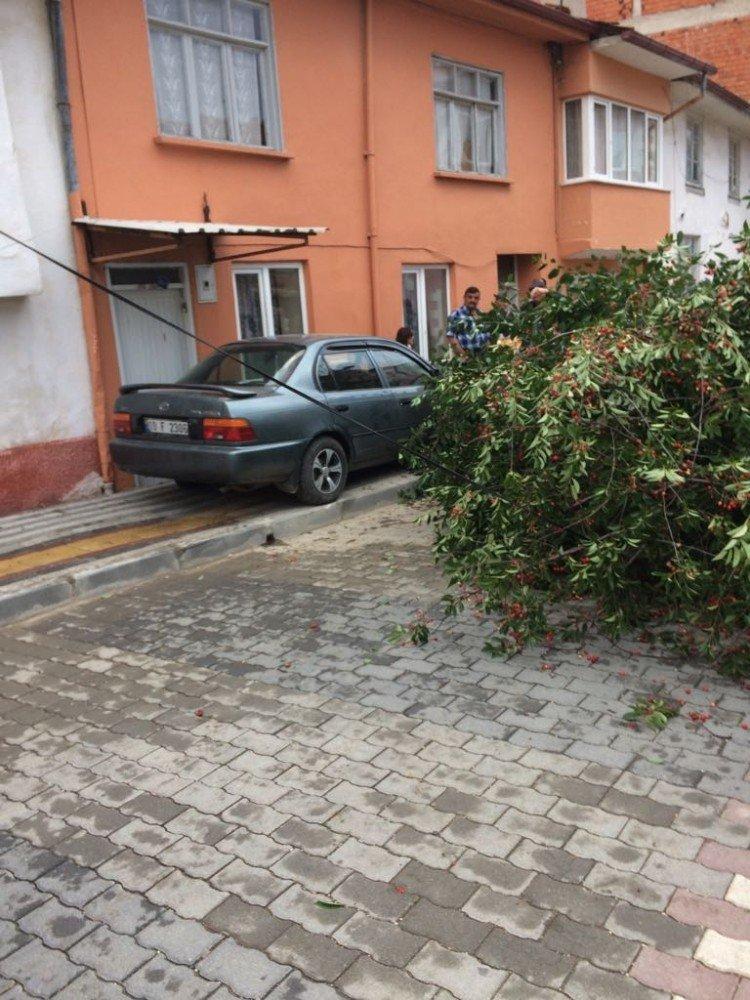 Otomobil ağacı devirdi