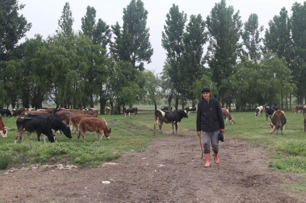 Suriyeli kardeşler Aslanapa'da çobanlık yapıyor