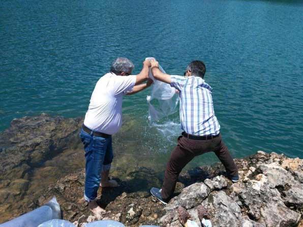 Manavgat Oymapınar Barajına 50 bin yavru sazan balığı salındı