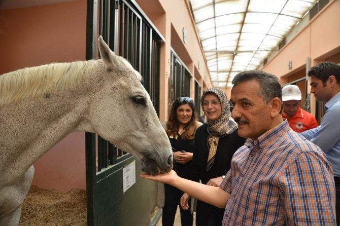 Vali Kaymak, Büyükşehir Belediyesi Atlı Spor Tesislerini gezdi