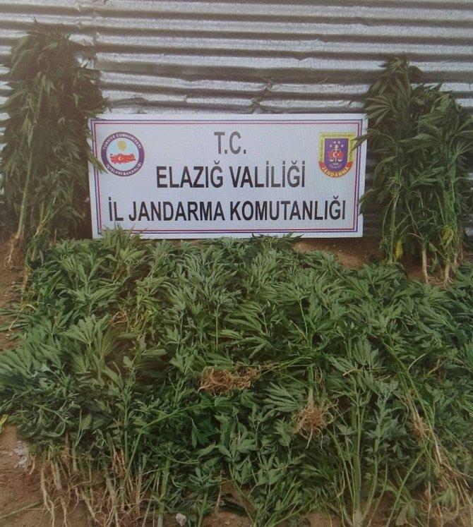 Jandarmadan uyuşturucu ile mücadele