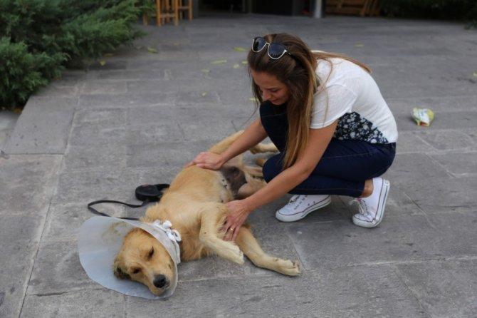 Sokakta bulduğu köpeğin ameliyatı için sponsor arıyor