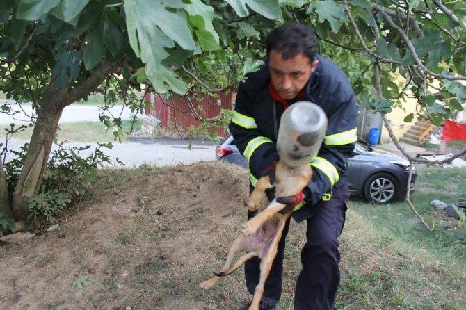 Kafasını turşu bidonuna sıkıştıran köpeğe itfaiye yardımı