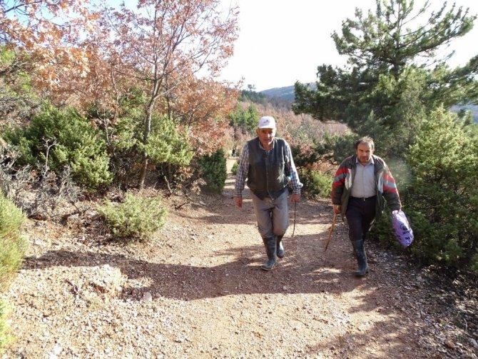 Ormanda kaybolan Alzheimer hastası adam bulunamıyor