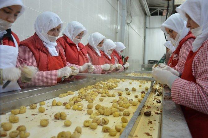 Kestane fiyatları uçuşa geçti, şeker üreticileri bu yıl para kazanmayacak