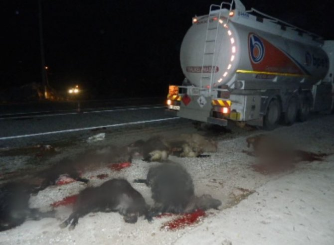 Akaryakıt tankeri küçükbaş hayvan sürüsüne daldı