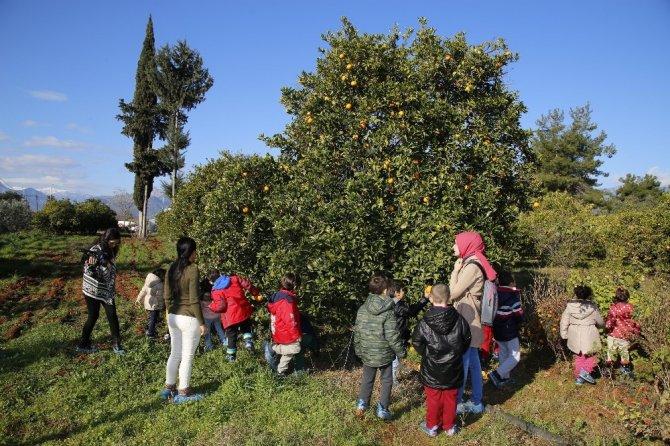 Ekolojik kreş öğrencilerinden portakal hasadı
