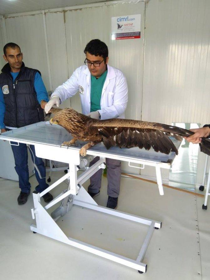 Yaralı kartal tedavi için Kars'a gönderildi