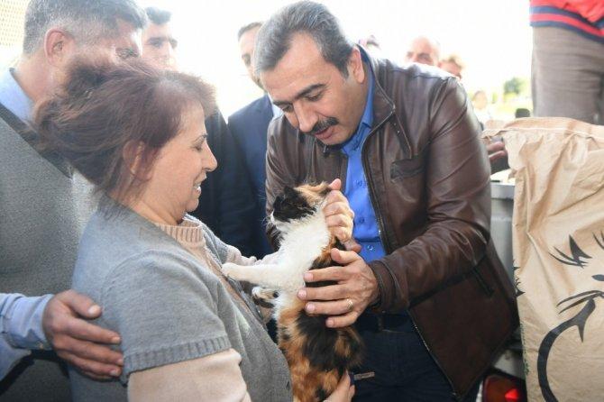 Çukurova Belediyesi kediler için mama dağıttı