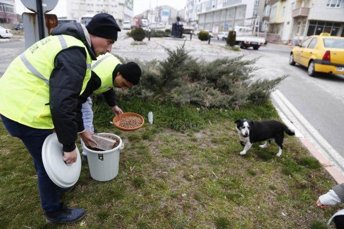 Sokaktaki hayvanlara mama desteği