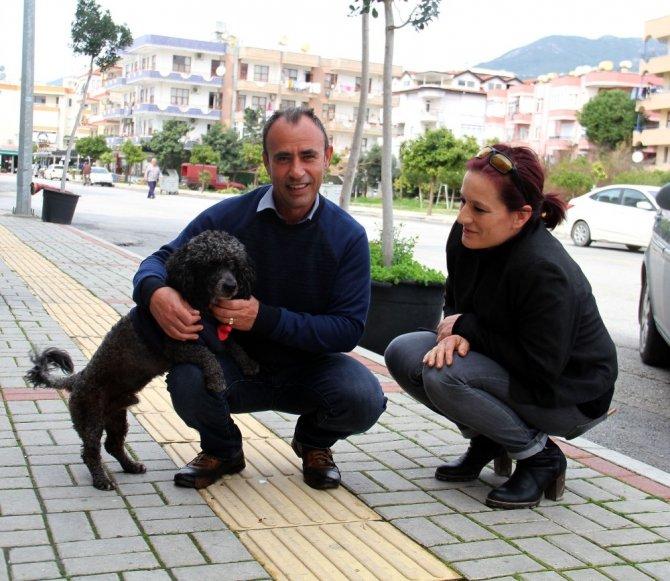 Kayıp köpeğin sahibini bulmak için sokak sokak dolaştı