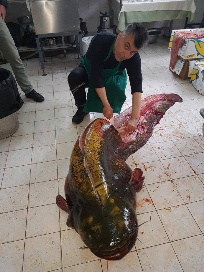 İznik Gölü'nden 2 metre 10 santim boyunda dev yayın balığı çıktı