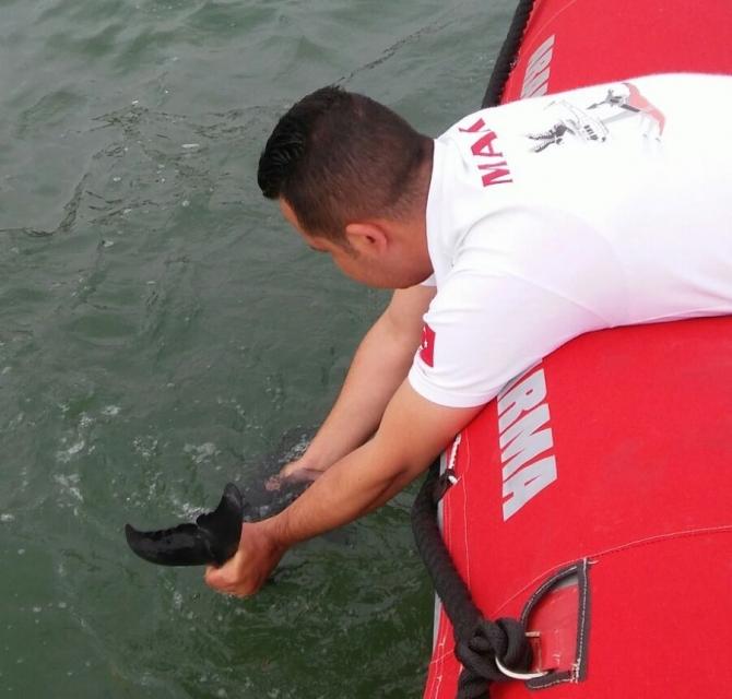 Yavru yunus balığını kurtarma operasyonu