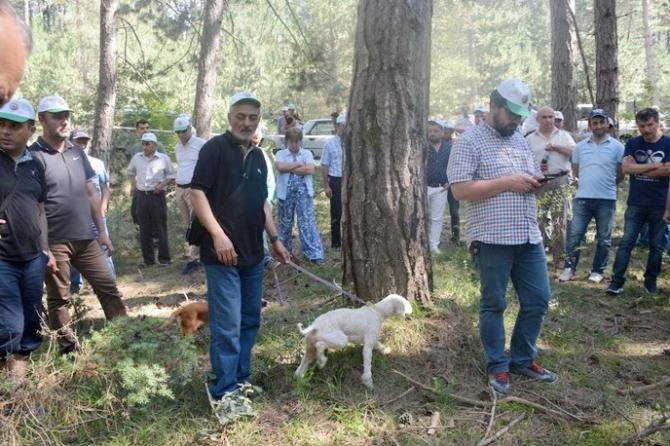 Bolu'da trüf avcılığı ve yetiştiriciliği eğitimi verildi