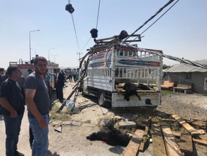 Ağrı'da trafik kazası: 20 hayvan telef oldu