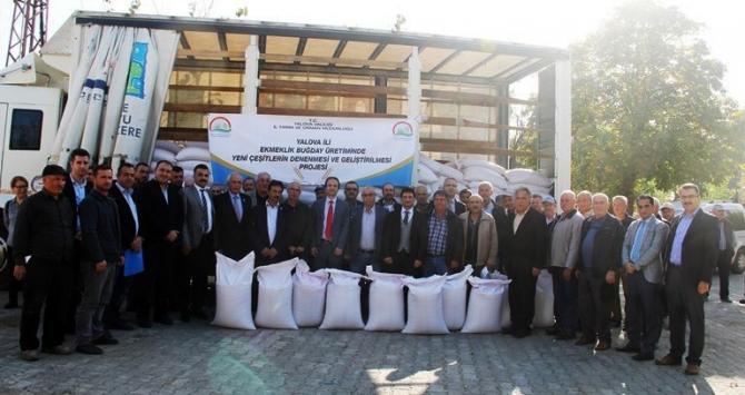 Yalova'da çiftçilere 26 ton buğday tohumu dağıtıldı