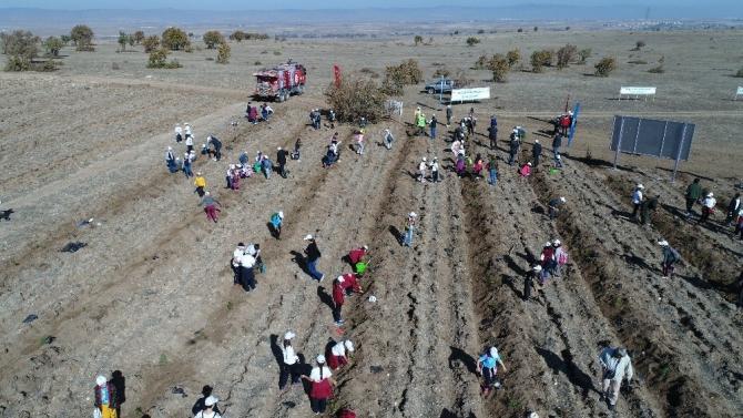 'Fidanlar, fidanlarla büyüyor' projesi ile bin fidan toprakla buluştu