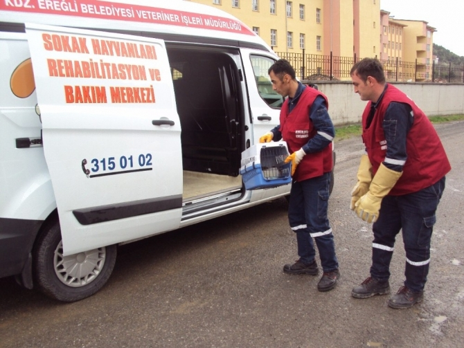 Kdz. Ereğli'de son 4,5 yılda yapılan denetimler neticesinde 4,5 ton et imha edildi