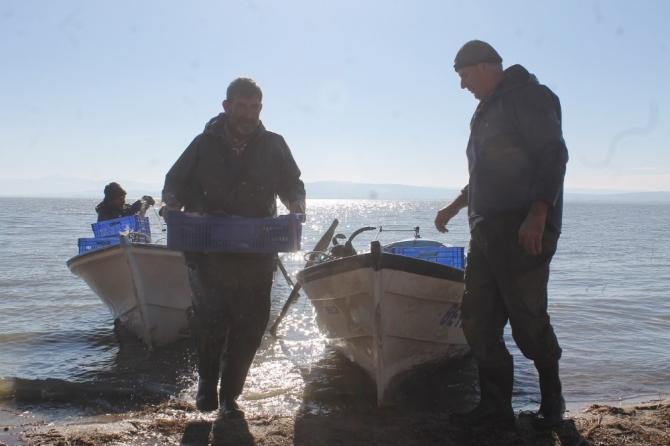 İsrail sazanları Irak ve Suriye'ye ihraç ediliyor