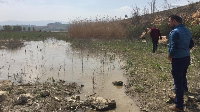 Bursa'da on binlerce balık kıyıya vurdu