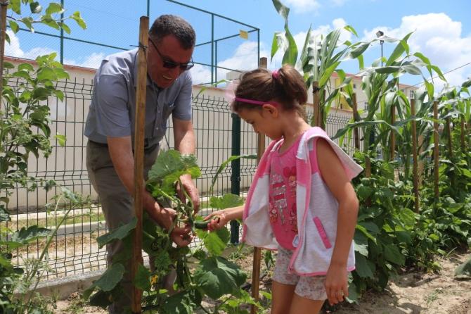 Bu bahçenin ürünlerini öğrenciler yetiştiriyor